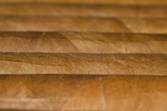 Close-up of Cigars. A macro photo of a bundle of cigars royalty free stock photos