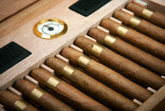 Close up of cigars in open humidor box stock photo