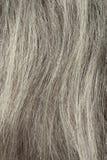Close up cinzento do cabelo Foto de Stock