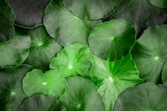 Close up the circle green leaf decoration as abstract green back Stock Photos