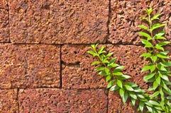 Close up climbing plants Stock Image