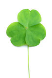 Close up of clover Stock Image