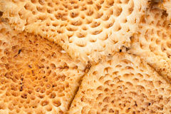 Close-up of cluster of Scaly Pholiota mushrooms Royalty Free Stock Photography