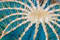 Cactus Spines. Close up of clusters of spines and needles of a cactus stock photography