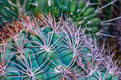 Cactus Spines. Close up of clusters of spines and needles of a cactus royalty free stock photo