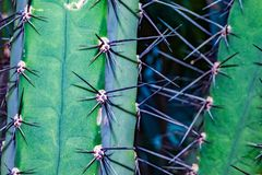 Cactus Spines. Close up of clusters of spines and needles of a cactus royalty free stock images