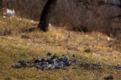 Close-up coals from campfire on spring grass in mountains left by tourists royalty free stock photos