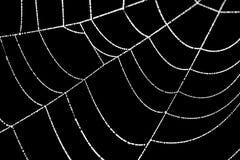 Close-up of a cobweb on a black background royalty free illustration