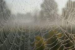 Close-up, Cobweb, Macro Stock Photo