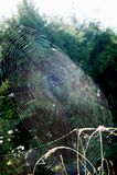 Close-up cobweb view Royalty Free Stock Photo
