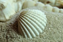 Close-up of a cockle shell in sand. Macrophotography of a white bleached cockle shell lying in sand on beach royalty free stock photography