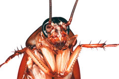 Close up of a cockroach Stock Photo