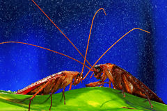Close up of cockroach Stock Photography