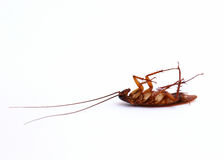 Close up cockroach Stock Photography