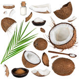 Close-up of a coconut collection on white background Stock Photography