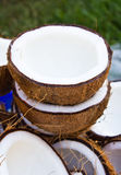 Close up of coconut Stock Photography