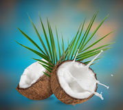 Close-up of a coconuts with milk splash. Stock Image