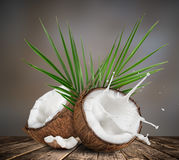 Close-up of a coconuts with milk splash. Royalty Free Stock Images