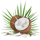 Close-up of a coconuts with milk splash on white background Royalty Free Stock Photos