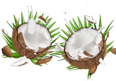 Close-up of a coconuts with milk splash on white background Stock Images