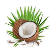 Close-up of a coconuts on white background Royalty Free Stock Images