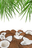 Close-up of a coconuts on white background. Close-up of a fresh tasty coconuts. Isolated on white background Royalty Free Stock Photo