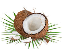 Close-up of a coconuts on white background Stock Photo
