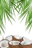 Close-up of a coconuts on white background Stock Photography