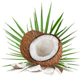 Close-up of a coconuts on white background. Close-up of a fresh tasty coconuts. Isolated on white background Stock Photo
