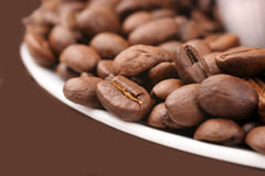 Close-up of coffee beans Stock Image