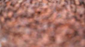 Close up of coffee beans Royalty Free Stock Image