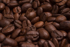 Close-up on Coffee beans. Coffea arabica. Royalty Free Stock Photos