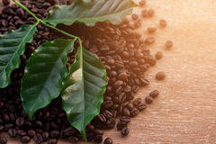 Close up coffee beans and fresh green leaf Stock Images
