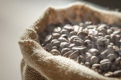 Close up coffee beans in jute bag Royalty Free Stock Images