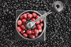 Close up of coffee beans ripening in coffee grinder Royalty Free Stock Images
