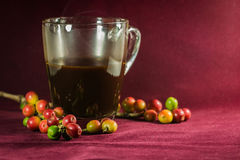 Close up of coffee and fresh raw coffee beans. On texture background Stock Images