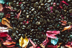 Close up of Coffee seed. Stock Photography