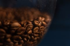 In the grinder, there are a lot of coffee beans, black background, focus, coffee beans royalty free stock images