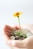 Close up coins in hand. Close up blossom and coins in hand Stock Image