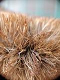 A close up of coir brush Stock Photos