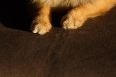 Close Up of Colored Puppy Paw royalty free stock photos