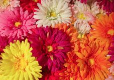 Close Up of Colorful Artificial Daisy Flowers Royalty Free Stock Photo