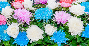 Close up colorful aster and rose Royalty Free Stock Photos