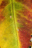 Close up of colorful autumn leaf Stock Photo