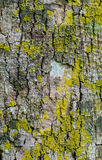Close up of colorful bark Royalty Free Stock Photography