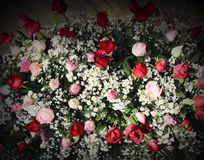 Colorful bouquet ornamental of red and pink roses blooming patterns with white daisy texture for background royalty free stock photography