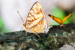 Close-up of colorful butterfly Royalty Free Stock Images