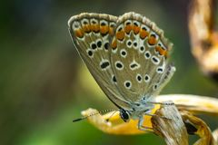 Close up of a colorful butterfly Stock Photo