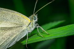 Close up of a colorful butterfly Stock Photos