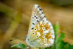 Close up of a colorful butterfly Stock Images